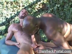 Porno Gay